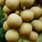 Nhãn tiêu Ido xuất khẩu Cái Bè Tiền Giang -----[Ảnh 1]-----