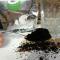 Cà phê nguyên chất chính gốc Đắk Lắk loại 500 gram -----[Ảnh 3]-----