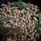 Nhãn tiêu Ido xuất khẩu Cái Bè Tiền Giang -----[Ảnh 2]-----
